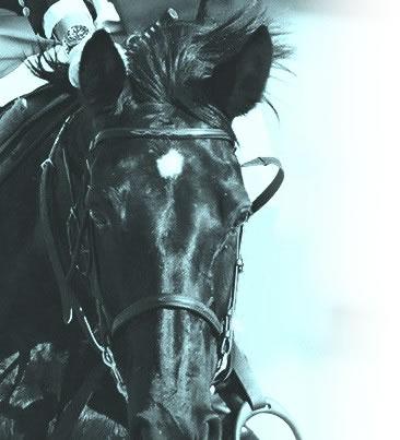 horse_top01