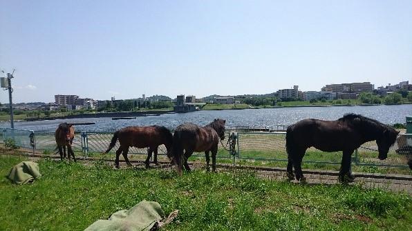 馬たちもお昼休み